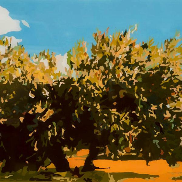 Olivo con Sombra[7734]