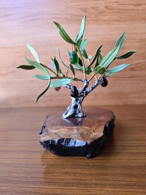 Olivo Aceitunas